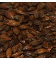 Grãos de Malte Patagônia Chocolate