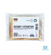 Scoby tipo Alemão Para Kombucha com Starter